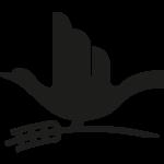 Produzione di pasta biologica artigianale, olio extra vergine di oliva bio e legumi bio - Prodotti da agricoltura biologica a Matera, Gravina in Puglia, Altamura, Basilicata